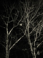 greymoon (LauraSorrells) Tags: trees winter sky moon digitalplay december branches eerie 2009 otherworldly