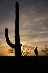 Saguaro National Park (Kathy~) Tags: saguaronationalpark nps cactus saguaro arizona hdr silhouette sunset favescontestwinner herowinner friendlychallenges