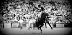 Fin de fiesta (Eduardo Amorim) Tags: horses horse southamerica caballo uruguay cheval caballos cavalos prado montevideo pferde cavalli cavallo cavalo gauchos pferd hest hevonen chevaux gaucho 馬 américadosul montevidéu häst uruguai gaúcho 말 amériquedusud лошадь gaúchos 马 sudamérica suramérica américadelsur סוס südamerika jineteada حصان άλογο americadelsud gineteada ม้า americameridionale semanacriolla semanacriolladelprado eduardoamorim ঘোড়া