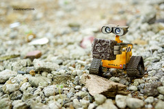 DSC01125-1.jpg (maxtrese) Tags: toy disney pixar walle toyphotography revoltech