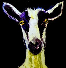 Gussie the Goat (brucecarlson66) Tags: blue black get color cute smile face yellow relax grey eyes friend funny purple state think feel gray goat calm your angry someone inside about feeling something better upset peacefulness collected gussie