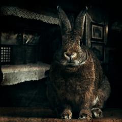 A long time ago (Jeric Santiago) Tags: pet rabbit bunny animal conejo cebu lapin hase kaninchen petphotography   compositephotography winterrabbit