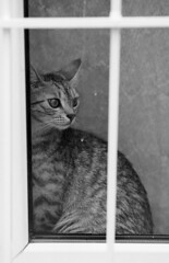 Curious cat (brenkee) Tags: street urban white black film window look cat 35mm canon eos budapest kitty delta indoor push 100 curious ilford distant lc29