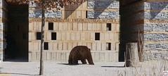 Brenhaus (auschmid) Tags: architecture bronzestatue bern tierpark za dhlhlzli sal85f14z brenhaus planart1485 slta99 auschmid