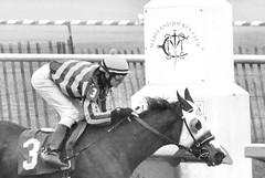 "2016-01-08 (24) r1 Taylor Hole on #3 The Nattitude Way (JLeeFleenor) Tags: photos photography md marylandracing marylandhorseracing laurelpark sport sports jockey جُوكِي ""赛马骑师"" jinete ""競馬騎手"" dżokej jocheu คนขี่ม้าแข่ง jóquei žokej kilparatsastaja rennreiter fantino ""경마 기수"" жокей jokey người horses thoroughbreds equine equestrian cheval cavalo cavallo cavall caballo pferd paard perd hevonen hest hestur cal kon konj beygir capall ceffyl cuddy yarraman faras alogo soos kuda uma pfeerd koin حصان кон 马 häst άλογο סוס घोड़ा 馬 koń лошадь bay bw blackwhite monochrome winner outside outdoors maryland"