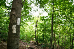 The Appalachian Trail (kzoop) Tags: park trees newyork tree nature outdoor hiking hike bearmountain manual 12mm bearmountainstatepark samyang applachiantrail