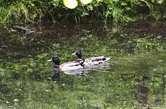 Parc De Biez - Mondeville (CyndiieDel) Tags: france nature normandie extrieur parc calvados mondeville bassenormandie parcdebiez