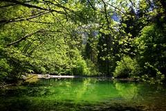 Mr green. (bmauviard) Tags: water ilovenature lacs amateurs natureshots waterwaterwater vivelanature