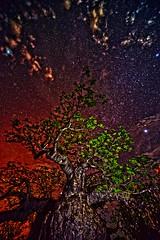 Boab Tree Kimberley Australia 2 DSC_5742 (JKIESECKER) Tags: longexposure trees sunset orange color stars australia nighttime tropicalforest tropicalbiodiversity kimberelyaustralia
