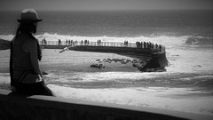 La Jolla Wall (Rand Luv'n Life) Tags: ocean california our people blackandwhite seascape pool monochrome la waves pacific seagull horizon watch daily seawall seals childrens challenge jolla odc