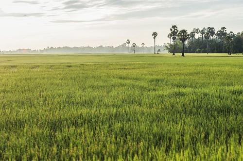 angkor - cambodge 2014 99