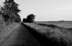 straight ahead (Fearghl Nessbank) Tags: monochrome way landscape blackwhite nikon straight blackwhitephotos d5100