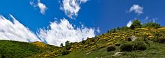 La florida dels blecs (Xevi V) Tags: landscape catalonia catalunya pyrenees pyrnes pirineos pirineus paisatge pallarssobir airelliure altpirineu valldecards pirineucatal parcnaturaldelaltpirineu lleret serramitjana miravall isiplou