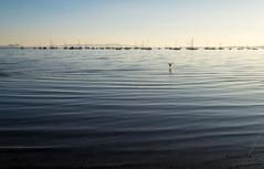 2016-02a-F2589 copia (Fotgrafo-robby25) Tags: mar aves marmenor barcosveleros lopagnmurcia fujifilmxt1gr
