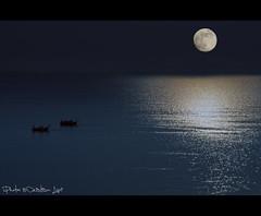 Under The Moonlight (Cristian Lupi 72) Tags: light sea moon fish lights fishing mare luna moonlight pesca notte pesce pescatori pescare peschereccio chiarodiluna pescherecci