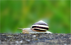 Nature is life (Simply Viola (+Off - On )) Tags: nature snail natura anima lumaca animale