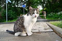 Katze (Tobi NDH) Tags: nature animal cat kat chat natur gato katze macska gatto kot koka kedi tier maka  felissilvestriscatus hauskatze