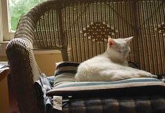 (more) Charlie (rootcrop54) Tags: sleeping sunlight white male window cat chat peaceful sunny kitteh faux serene asleep  macska gatto katzen rattan kot koka kedi katt kissa kttur maka kucing  allwhite   kat  maek kais pisic gorbe