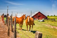 No Snacks!?! (KPortin) Tags: horses barn fence hff grantcounty