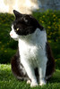 The King of Castle III (Ricsilva76) Tags: blackandwhite castle grass animal cat blackcat garden gato jardim castelo felino whitecat relva gatopreto gatobranco