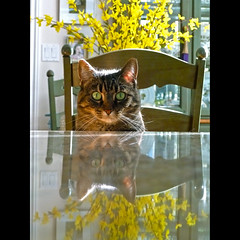 double vision (anniedaisybaby) Tags: light pet baby reflection backlight cat lumix mirror eyes feline tabby greeneyes stare cateyes beloved thelittledoglaughed bestofcats impressedbeauty impressedbyyourbeauty betterthangood texturefree lightpainterssociety thelittledoglaughedhonorablementioncontestwinnerforcontest51
