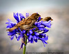 February 14th St Valentine's Day (OpenWideShutf2.8) Tags: flowers flower bird nature birds canon 450d newzealandplaces salveanatureza