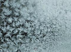 Frosty Frozen Frost 1 (MiK7124) Tags: winter cold window frost down frostywindow downfeather fujifilmfinepixs9600