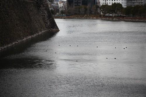 冷たい風-大阪城の堀