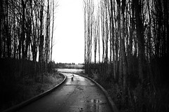(sparth) Tags: road seattle park leica trees 35mm blackwhite washington december child voigtlander redmond wa 12 washingtonstate noirblanc m9 2011 leicam9
