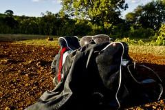 IMG_2578 (Jack Zalium) Tags: trees sky sunlight sunglasses bag tanzania earth ngorongoro dust goldenhour arusha courierbag vinylbag africanpowder conversecourierbag nellumazilu