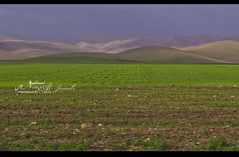 "The beauty of Northern of IRAQ | Suliamani From My Perspective {13/} (Noor Al-janabi ""N.J"") Tags: green nature iraq baghdad lands northern iraqi kurdistan  irak halabja sulimania   suli    kurdstan sulaymaniyah   sulimani"