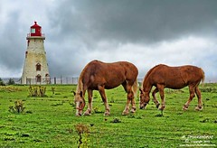 Lighthouse on Panmure Island, Prince Edward Island Canada (PhotosToArtByMike) Tags: horse lighthouse canada landscape scenic princeedwardisland pei panmureisland lightstation landscapephotograph