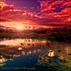 Swan lake. (Edward Dullard Photography. Kilkenny, Ireland.) Tags: kilkenny ireland light sunset sky cloud lake reflection nature water landscape licht aqua wildlife ducks surreal eire swans photoart libre irlanda ierland edwarddullardphotography magicalskies