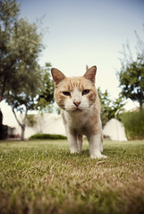 Curious Lukas (Alberto Sen (www.albertosen.es)) Tags: madrid españa cat spain alberto gato lukas sen albertorg albertosen