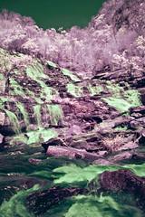 Mae Ya Waterfall Cascades In Infrared (aeschylus18917) Tags: nature forest river landscape ir thailand waterfall nikon scenery d70 nikond70 surreal falls thai infrared chiangmai nikkor cascade 1870mm f3545g taki 滝 1870 doiinthanon 瀧 เชียงใหม่ 赤外線 ราชอาณาจักรไทย 1870f3545g ดอยอินทนนท์ maeya d700 ダニエル ratchaanachakthai nikond700 nikkor1870f3545g maeyawaterfall たき danielruyle aeschylus18917 danruyle druyle ルール ダニエルルール nikkor1870f3545gdx