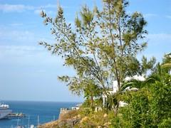 Morro del Jable, Fuerteventura (Invvigren) Tags: sea vacation holiday plant flower tree beach nature strand landscape island spain flora fuerteventura natur playa canarias blommor canaryislands träd semester spanien seaview fishingvillage hav habour kanarieöarna morrojable morrodeljable