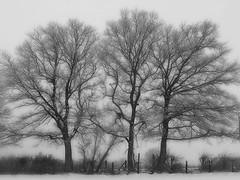 1111 Trees