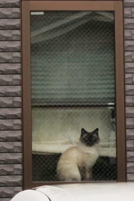 Today's Cat@2012-03-17