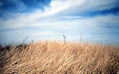 (Emily Savill) Tags: sky film analog ma ic massachusetts dunes dune 400 200 analogue hull walgreens vivitar nantasket ic400