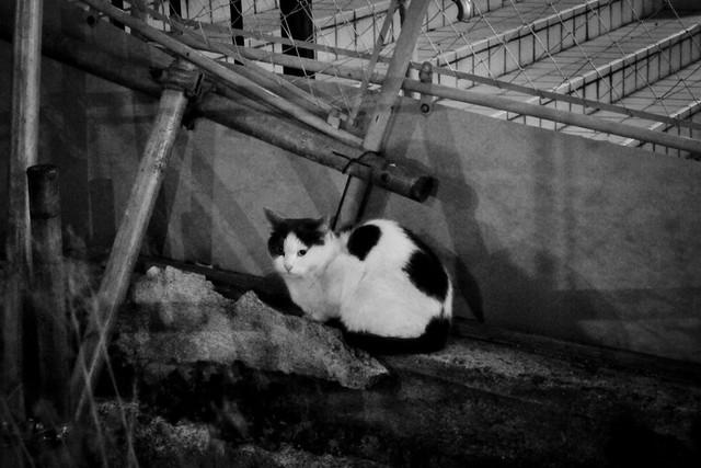 Today's Cat@2012-03-23