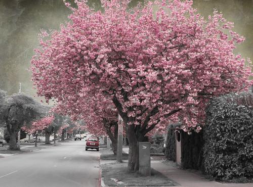 April in Victoria series
