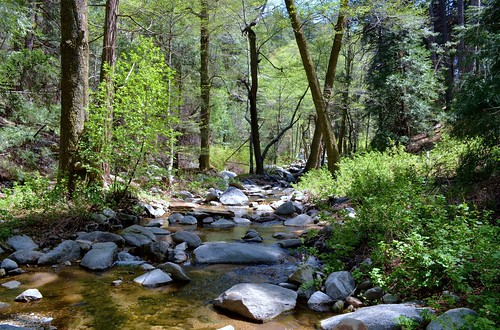 Wooded trail and stream leading to Heart Falls/ Seely Falls