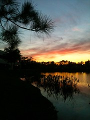 Pond at sunset, 3/31/2014, Largo Florida (Barefoot In Florida) Tags: sunset water pond florida largo