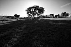 Backyard in the Spring (David's_silvershots) Tags: usa canon eos texas aledo 5dmkii 5dmk2