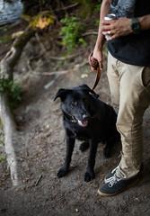 Patience (Mason Aldridge) Tags: dog cute canon puppy 50mm mix eyes lab labrador dof sweet bokeh shepherd f14 adorable depth pupper woofer shallowdepthoffield 6d wideopen