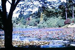 PICT2939 (Tilley441) Tags: park 1969 film wales architecture analog 35mm kodak streetphotography july 35mmslides kodachrome filmcamera oldphotos 89 transparencies filmphotography seafield daysgoneby shootfilm filmisnotdead filmsnotdead 35mmfilmphotography 35mmkodachrome 35mmtransparencies tilley441 analoguefeatures filmphotographic