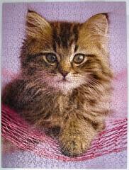 Minnie (Rachael Hale) (Leonisha) Tags: cat kitten chat puzzle katze jigsawpuzzle ktzchen