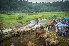 47_20160315-171430-_DSC5557 (trueforever) Tags: indonesia ibis bukittinggi padang novotel pagaruyung minangkabau jamgadang lembahharau westsumatera batusangkar tanahdatar ngaraisianok padangpanjang pacujawi padangpariaman