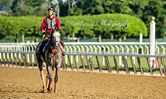 Lani (EASY GOER) Tags: park horses horse sports belmont racing races thoroughbred equine