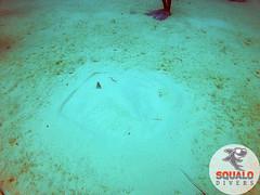 Scuba Diving-Miami, FL-Jun 2016-2 (Squalo Divers) Tags: usa divers florida miami scuba diving padi ssi squalo divessi